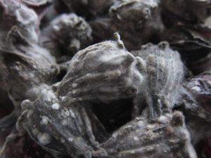 Close up of mould spores